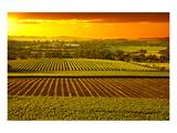 Barossa Vineyards Australia Póster