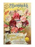 Barteldes Catalog Lawrence KS Poster