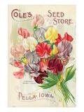 Cole's Seed Store Pella Iowa Láminas