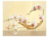 Bol D'Orchidées Prints by Gerard Beauvoir