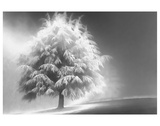 Schwartz - Enlightened Tree Prints by Don Schwartz