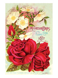 Mcgregor Bros. Floral Gems Láminas
