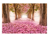 Pink Cherry Blossom Tunnel Stampe