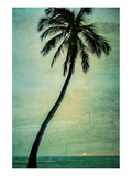 Schwartz - Lone Palm Posters by Don Schwartz