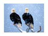 Winter Drifters Pósters por Gary Crandall