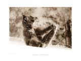 Yoga Bear Affiches par Gary Crandall