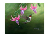 Rufous and Fuchsias Posters by Julie Peterson