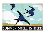 Summer Shell is Here Kunstdrucke