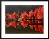Trees Vs Trees Framed Photographic Print by Philippe Sainte-Laudy