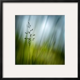 Morning Grass Framed Photographic Print by Ursula Abresch