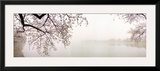 Cherry Blossoms at the Lakeside, Washington DC, USA Framed Photographic Print by  Panoramic Images