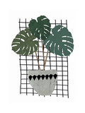 Monstera Giclee Print by Seventy Tree