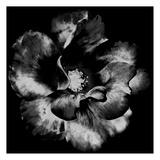 Black Garden Pôsters por Sheldon Lewis
