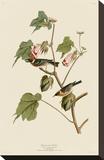 Bay-Breasted Warbler Opspændt lærredstryk af John James Audubon