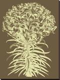 Lilies 3 Toile tendue sur châssis par  Botanical Series