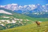 Lonely Elk Alpine Meadow Reproduction photographique par  duallogic