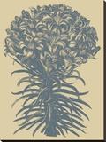 Lilies 1 Toile tendue sur châssis par  Botanical Series