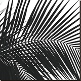 Palms 10 (detail) Stretched Canvas Print by Jamie Kingham