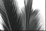 Palms 15 Stretched Canvas Print by Jamie Kingham