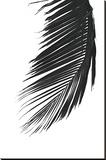 Palms 8 Bedruckte aufgespannte Leinwand von Jamie Kingham