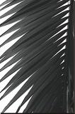 Palms 7 Bedruckte aufgespannte Leinwand von Jamie Kingham