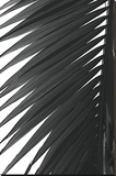 Palms 7 Stretched Canvas Print by Jamie Kingham