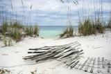 Sand Fence and Sea Oats at Florida Beach Premium fotografisk trykk av  forestpath