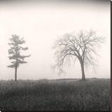 Tree, Study 8 Impressão em tela esticada por Andrew Ren