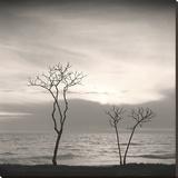 Tree, Study 4 Impressão em tela esticada por Andrew Ren