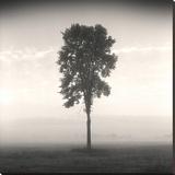 Tree, Study 1 Impressão em tela esticada por Andrew Ren