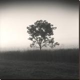 Tree, Study 3 Impressão em tela esticada por Andrew Ren