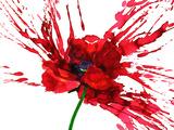 Poppy Flower Plakater af  okalinichenko