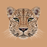 Illustrative Portrait of Leopard. Cute Face of African Leopard. Print by  ant_art19