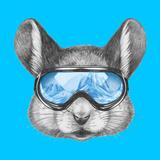 Portrait of Mouse with Ski Goggles. Hand Drawn Illustration. Láminas por  victoria_novak
