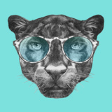 Portrait of Panther with Glasses. Hand Drawn Illustration. Plakater af  victoria_novak