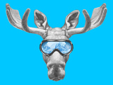 Portrait of Moose with Ski Goggles. Hand Drawn Illustration. Póster por  victoria_novak