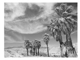 Anza Borrego 2 Kunstdrucke von Murray Bolesta