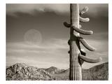 Desert Moon Posters par Murray Bolesta