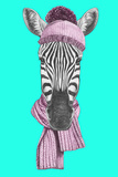 Portrait of Zebra with Hat and Scarf. Hand Drawn Illustration. Prints by  victoria_novak