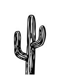 Cactus on White Prints by Ashlee Rae