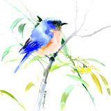 Oiseau bleu Affiches par Suren Nersisyan