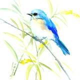 Eastern Bluebird Póster por Suren Nersisyan