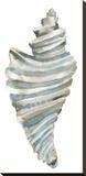 Coastal Seashells - Drill Bedruckte aufgespannte Leinwand von Sandra Jacobs