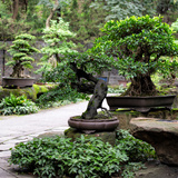 China 10MKm2 Collection - Bonsai Trees Photographic Print by Philippe Hugonnard