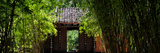 China 10MKm2 Collection - Bamboo Forest Photographic Print by Philippe Hugonnard