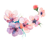 The Spring Flowers Watercolors Isolated on the White Background Prints by  la_balaur