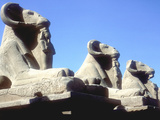 Ram-Headed Sphinxes, Temple of Amun, Karnak, Egypt Fotografisk tryk af CM Dixon