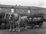 Tetley Shire Horses and Dray, Joshua Tetley Brewery, Leeds, West Yorkshire, 1966 Reproduction photographique par Michael Walters