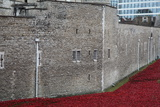 Blood Swept Lands and Seas of Red, Tower of London, 2014 Photographic Print by Sheldon Marshall