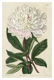 Imperial Floral I Giclee Print by Vision Studio